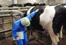 肉牛の生体検査